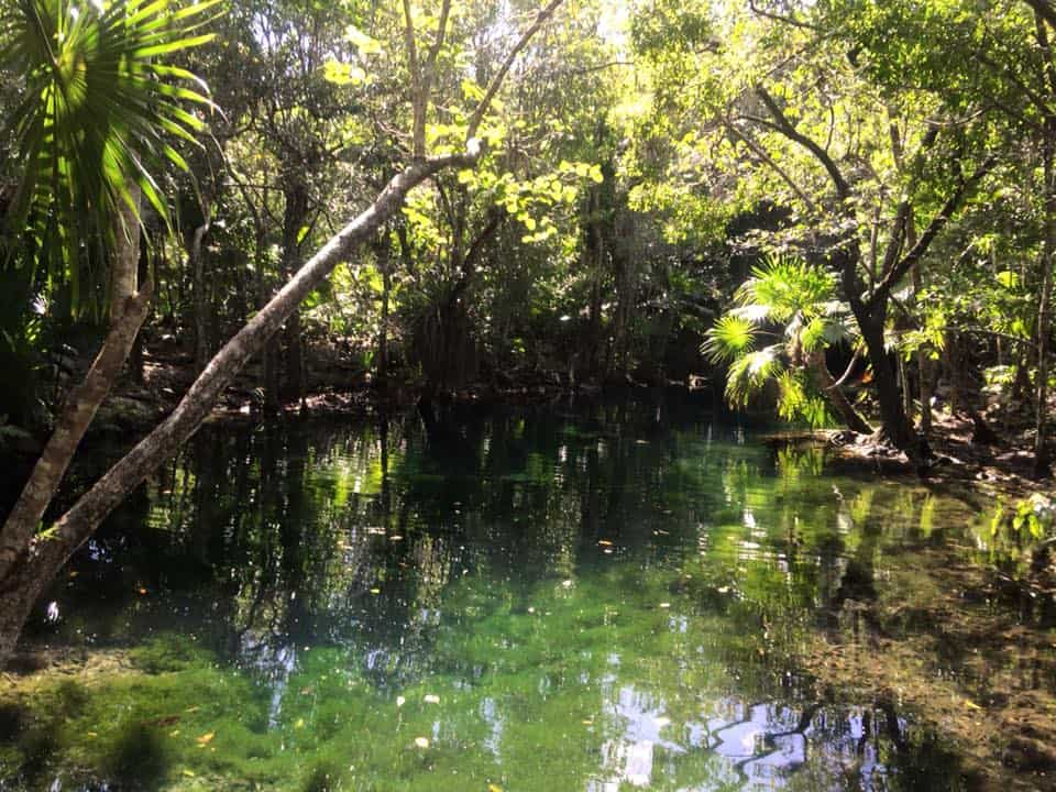 Mexican paradise - the cenotes.